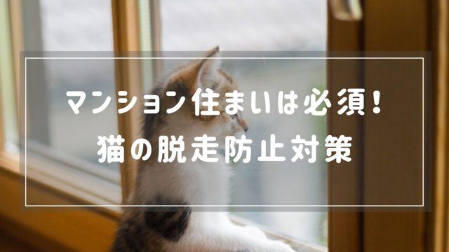 【マンション住まいは必須】猫の脱走対策におすすめの方法